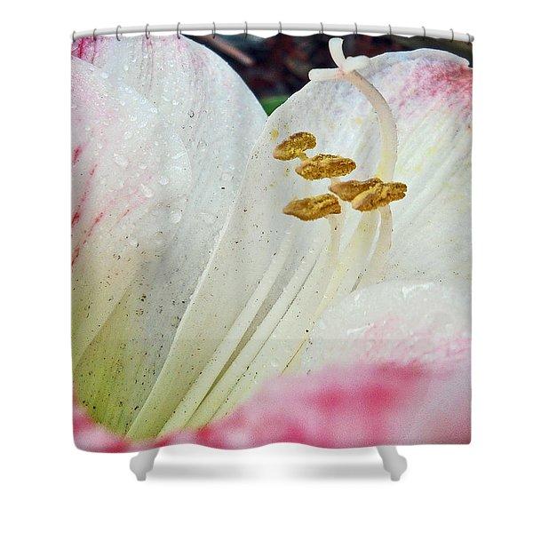 Amaryllis Belladonna Shower Curtain