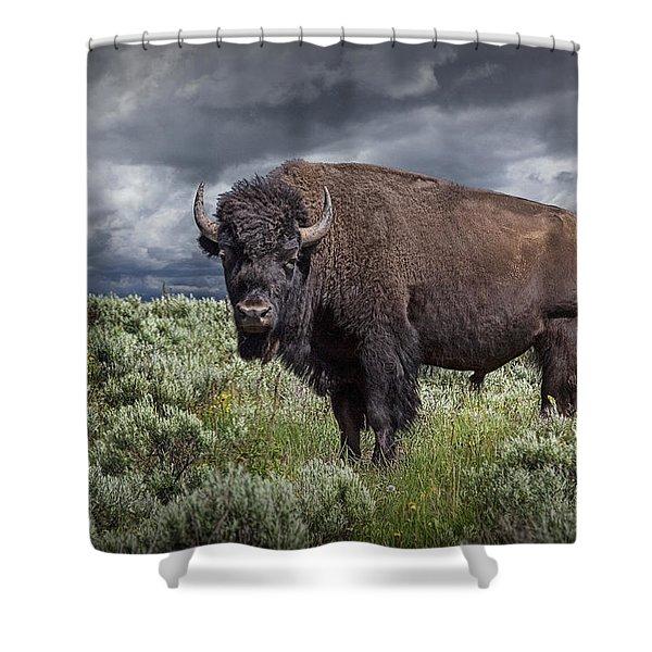 American Buffalo Or Bison In Yellowstone Shower Curtain