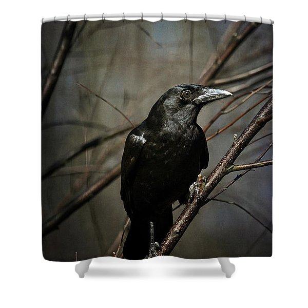 American Crow Shower Curtain