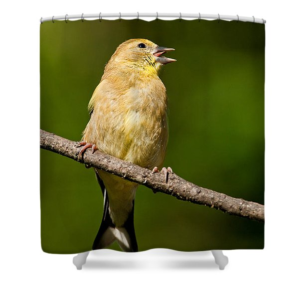 American Goldfinch Singing Shower Curtain