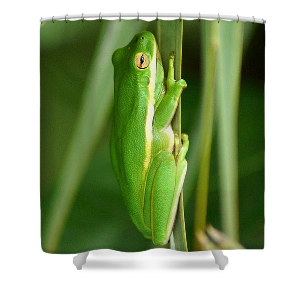 American Green Tree Frog Shower Curtain