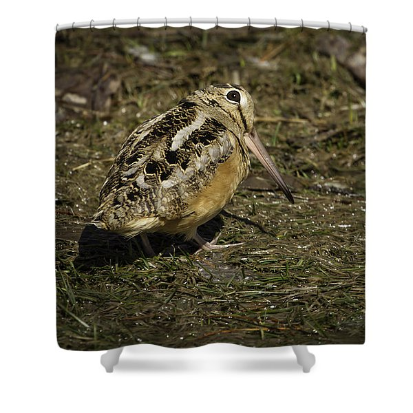 American Woodcock 2 Shower Curtain