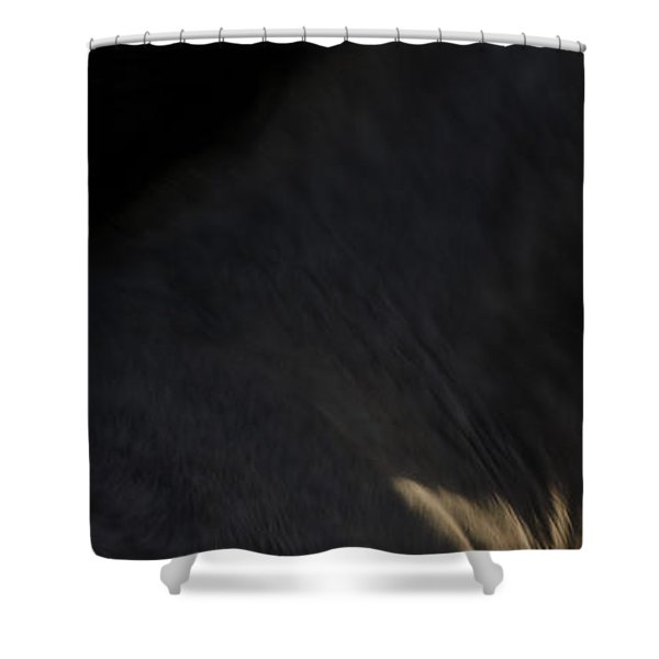 Shower Curtain featuring the photograph Americano 18 by Catherine Sobredo