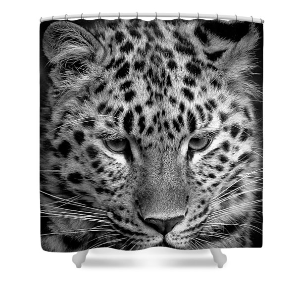 Amur Leopard In Black And White Shower Curtain