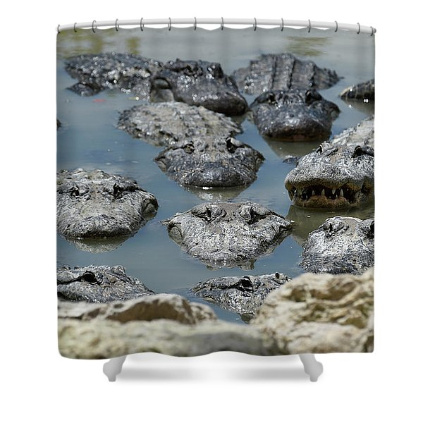 An America Alligators In Swamp Shower Curtain