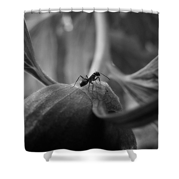 An Ant's Life Shower Curtain