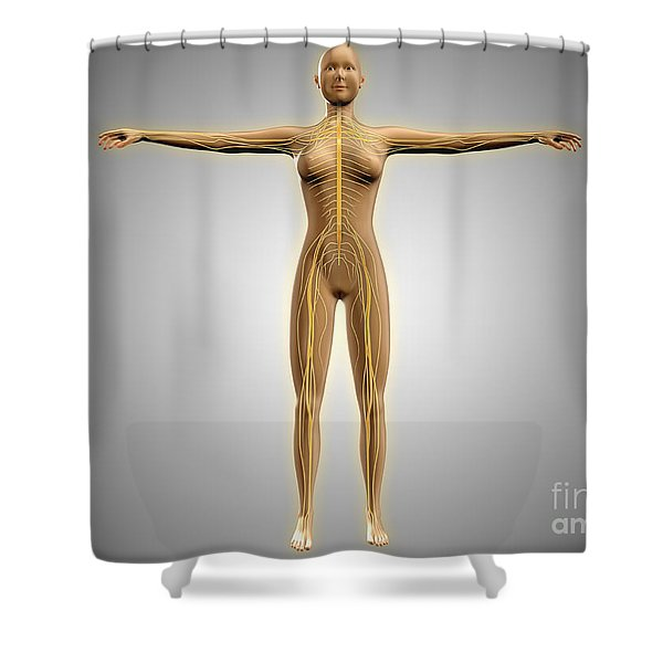 Anatomy Of Female Body With Nervous Shower Curtain