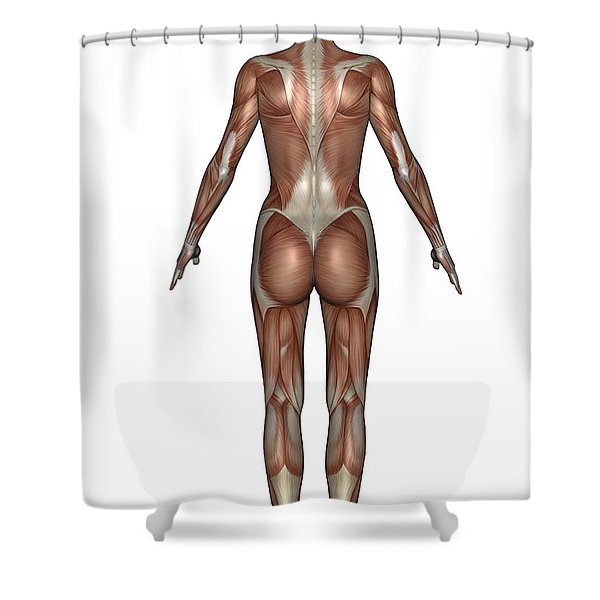 Anatomy Of Female Muscular System, Back Shower Curtain