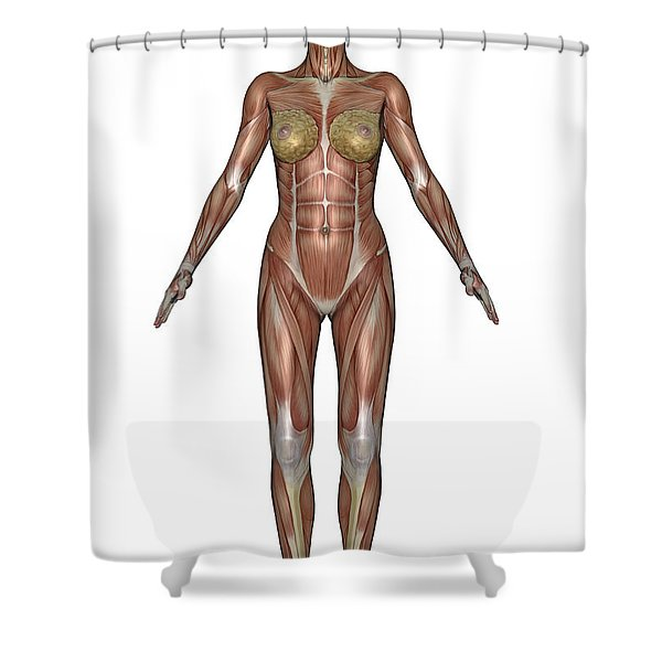 Anatomy Of Female Muscular System Shower Curtain