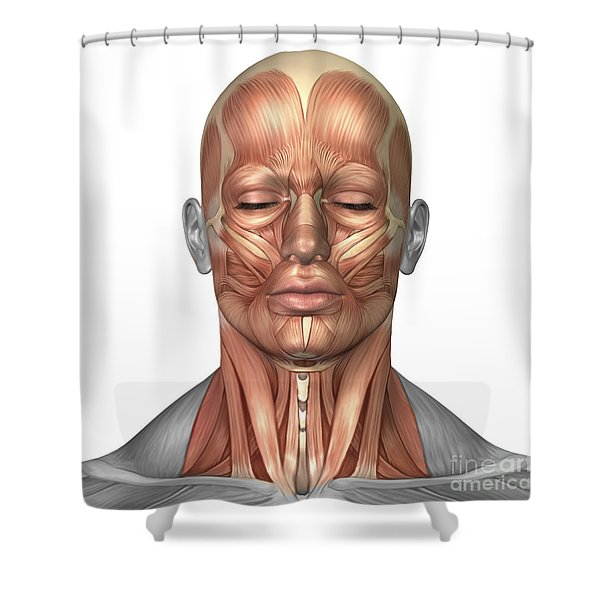 Anatomy Of Human Face And Neck Muscles Shower Curtain
