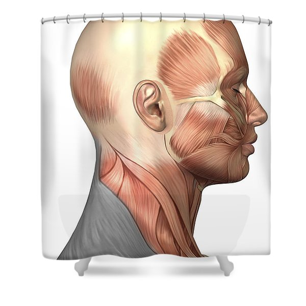 Anatomy Of Human Face Muscles, Side Shower Curtain