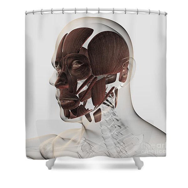 Anatomy Of Male Facial Muscles, Side Shower Curtain
