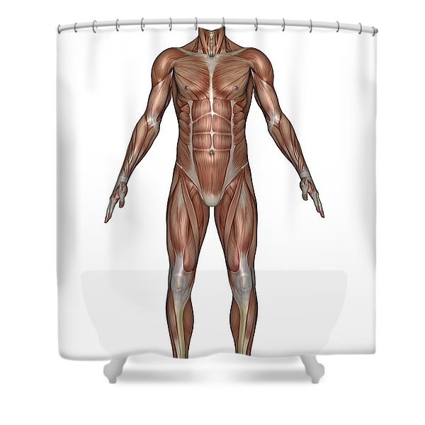 Anatomy Of Male Muscular System, Front Shower Curtain