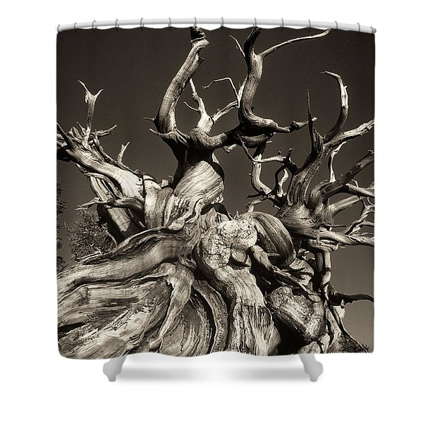 Ancient Bristlecone Pine In Black And White Shower Curtain