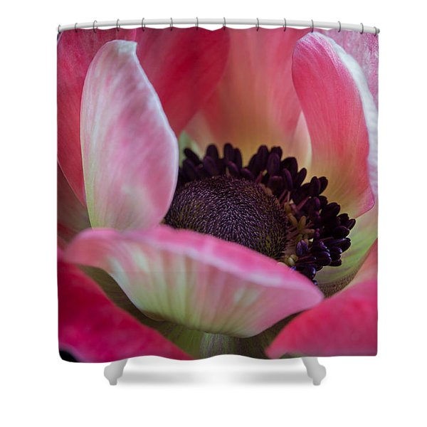 Anemone In Fuchsia Shower Curtain