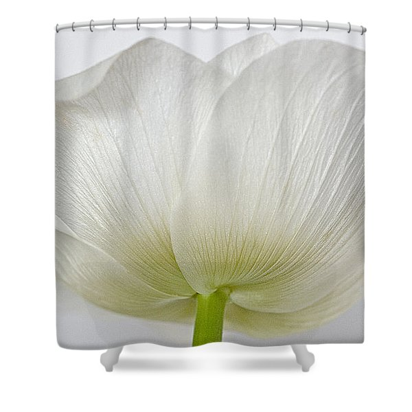 Anemone Shower Curtain