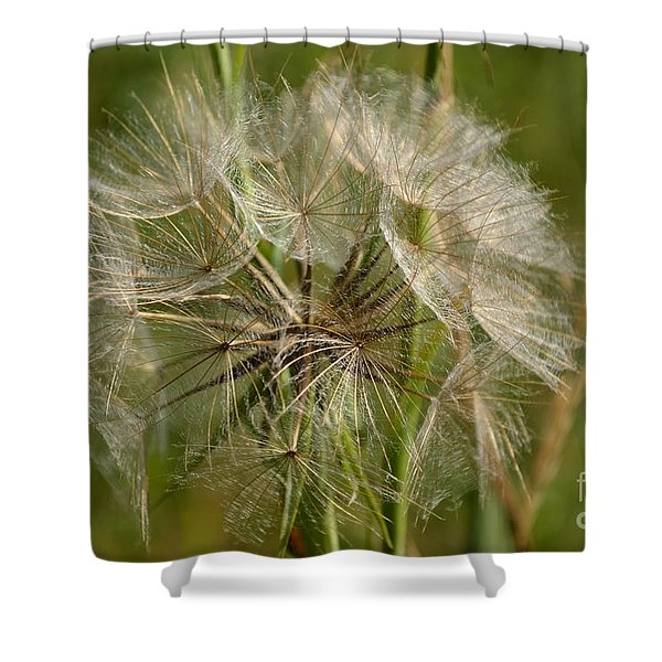 Shower Curtain featuring the photograph Angel Petals by Scott Lyons