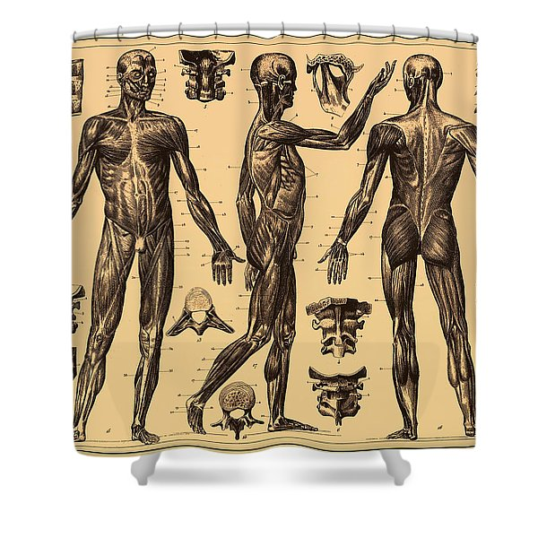 Antique Poster Of The Human Body Shower Curtain