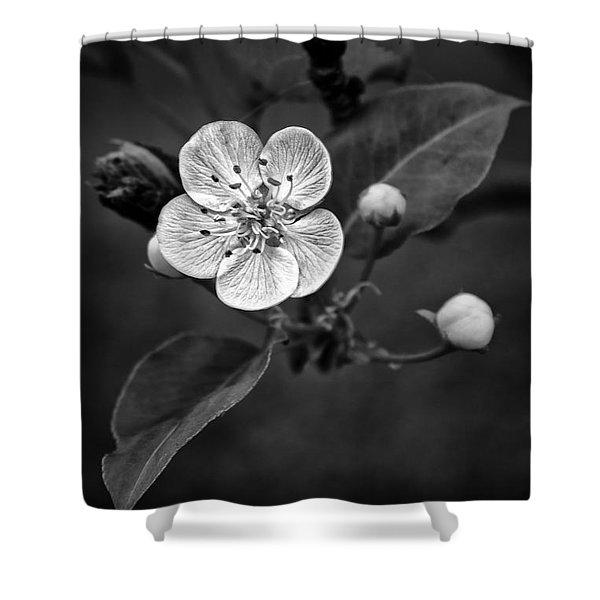 Apple Blossom On The Farm Shower Curtain