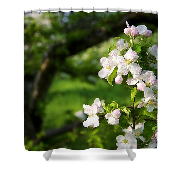 Apple Blossoms In The Orchard Shower Curtain