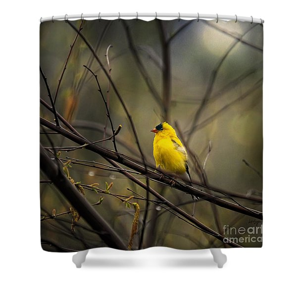 April Showers In Square Format Shower Curtain