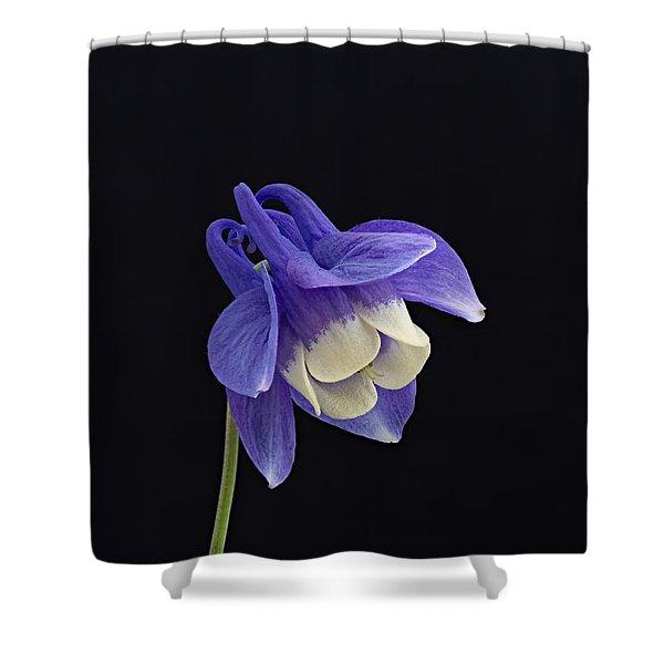 Aquilegia Flabellata -1 Shower Curtain