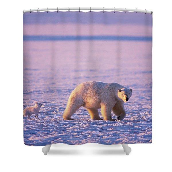 Arctic Fox Follows A Polar Bear Shower Curtain