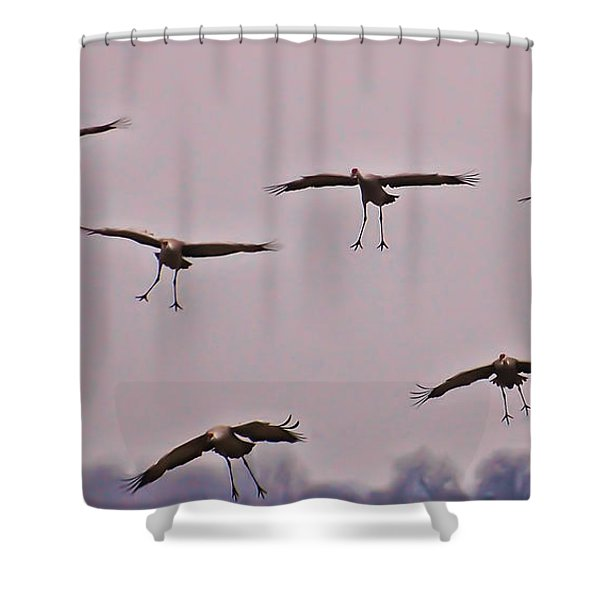 Are You Sure this is the Spot Shower Curtain by Don Schwartz