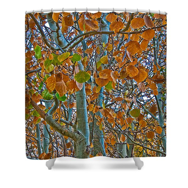 Shower Curtain featuring the photograph Aspen Leaves In The Fall by Mae Wertz