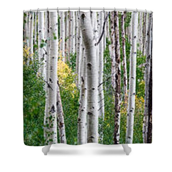 Aspen Trees Shower Curtain