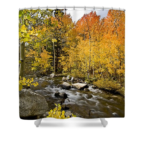 Aspens At Bishop Creek Shower Curtain