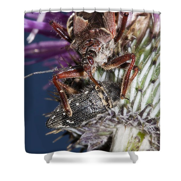Assassin Bug Preying On Beetle Shower Curtain