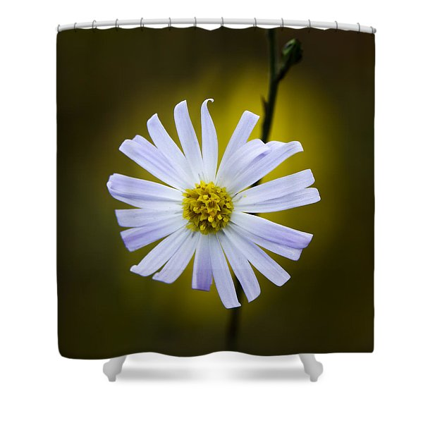 Aster Shower Curtain