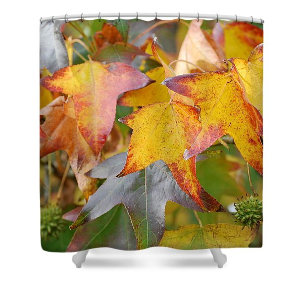 Autumn Acer Leaves Shower Curtain