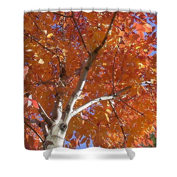Autumn Aspen Shower Curtain