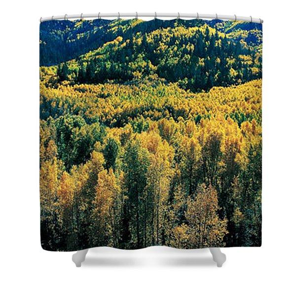 Autumn Aspens, Colorado, Usa Shower Curtain