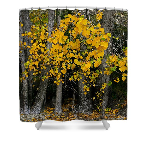 Autumn Breakout Shower Curtain