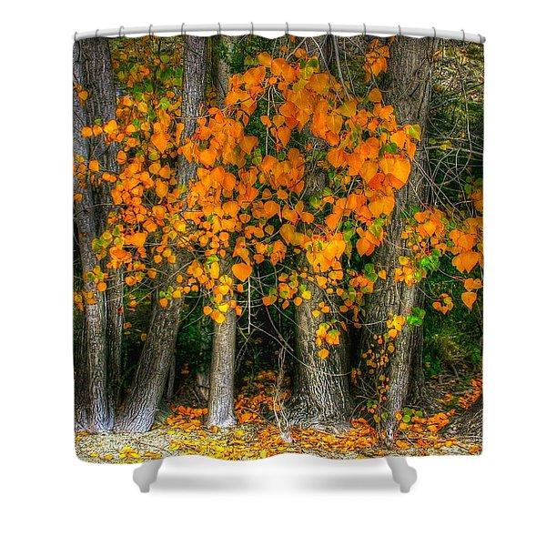 Autumn Breakout No.2 Shower Curtain