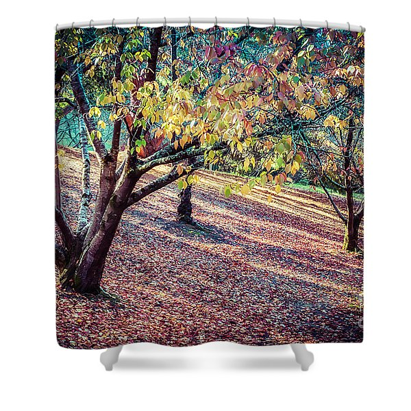 Autumn Grove Shower Curtain