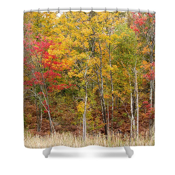 Autumn In Muskoka Shower Curtain