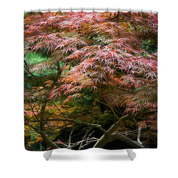 Autumn Is Here Shower Curtain