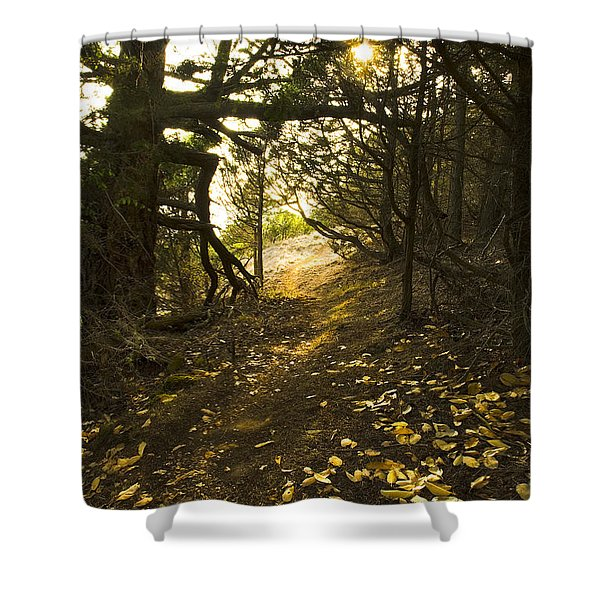 Autumn Trail In Woods Shower Curtain