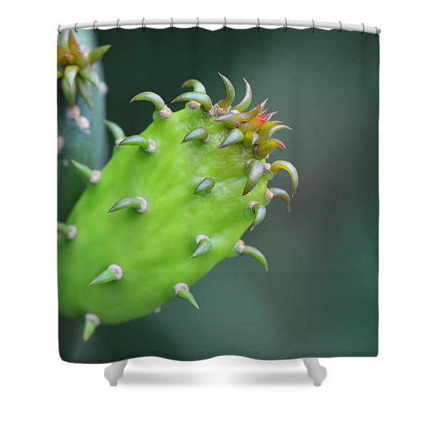 Baby Cactus - Macro Photography By Sharon Cummings Shower Curtain