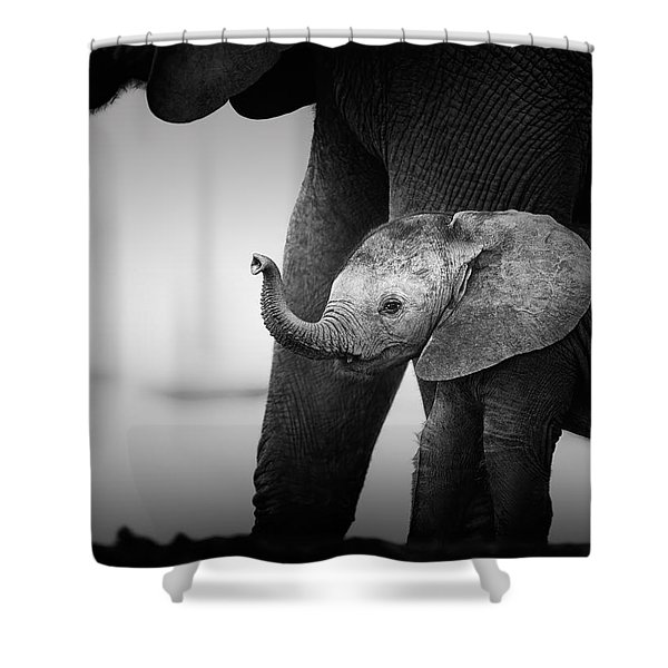 Baby Elephant Next To Cow  Shower Curtain
