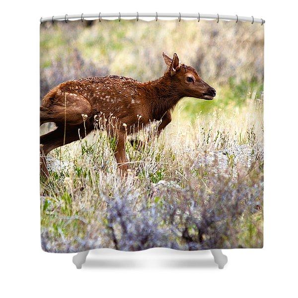 Baby Elk Shower Curtain