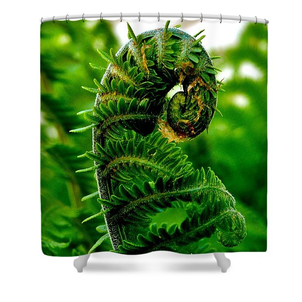 Baby Fern Shower Curtain