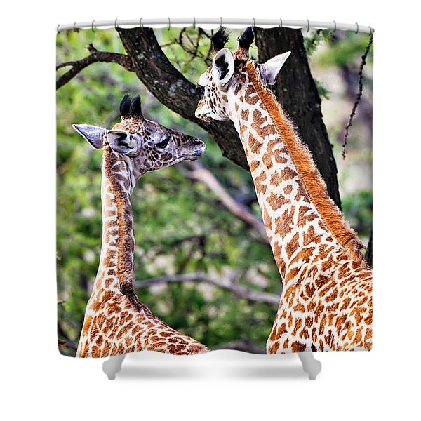 Shower Curtain featuring the photograph Baby Giraffes by Perla Copernik