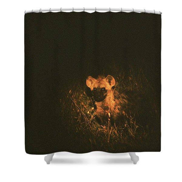 Baby Hyenia, Kenya Shower Curtain