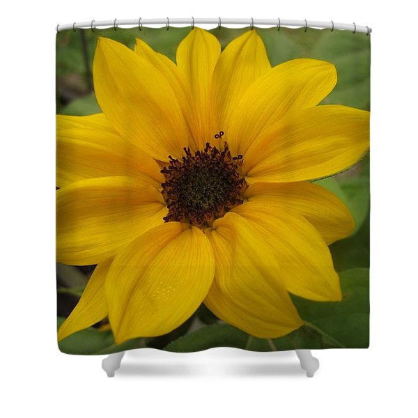 Baby Sunflower Shower Curtain