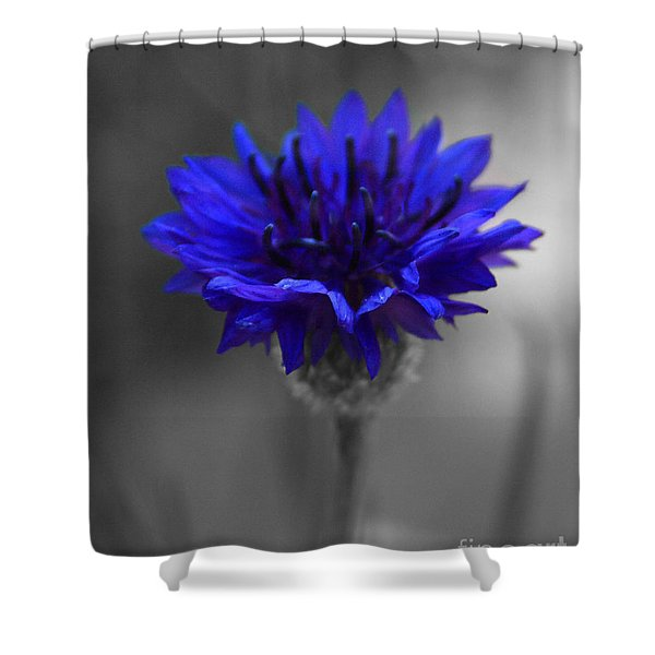 Bachelor's Button Shower Curtain
